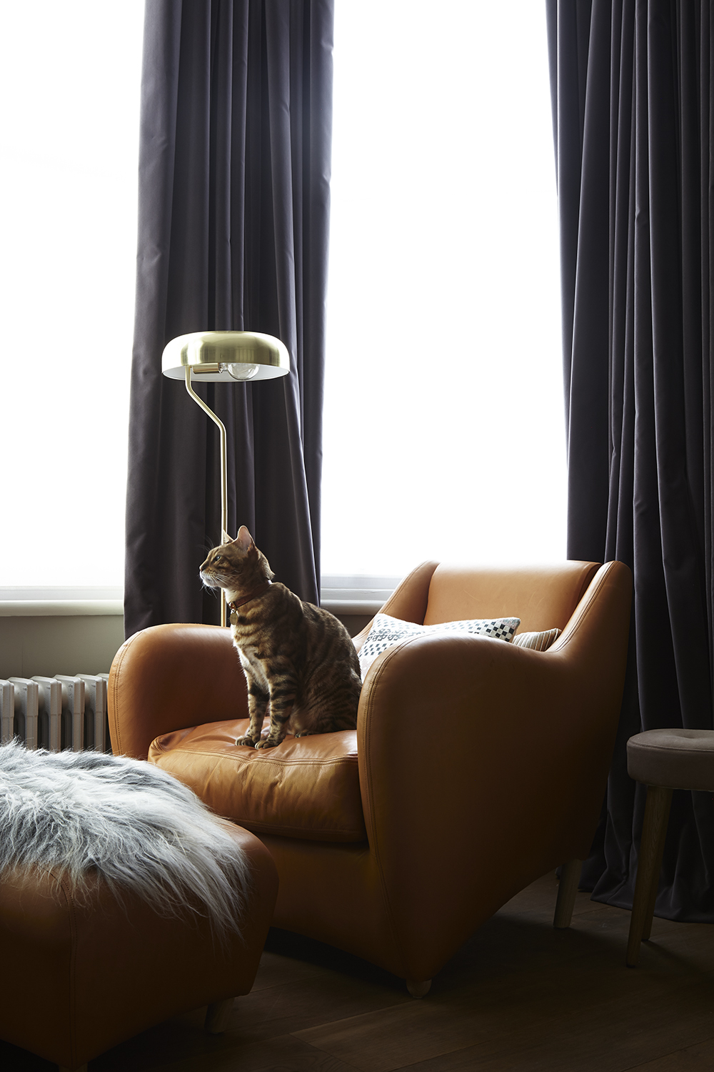 interior-design-styling-residential-chair-leather-throw-window-cat-cushions-lamp